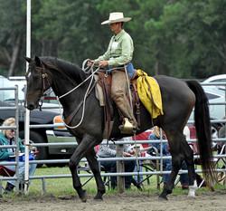 Simple Equine Teaching - Soft