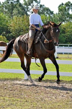 Simple Equine Teaching - Berlin1