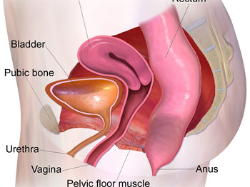 Vaginismus; Definition, Causes And Treatments