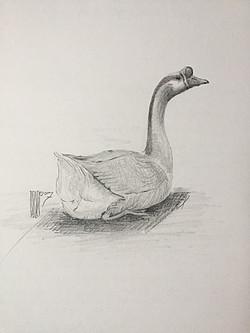 """""""Butte Park Goose"""""""