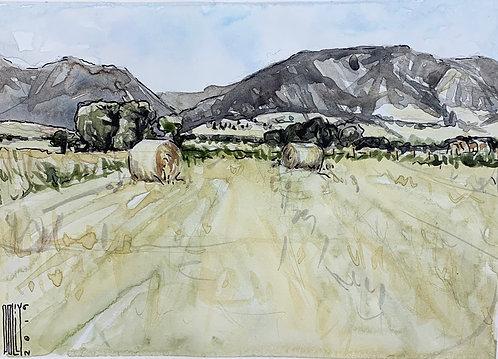 Eatons' Ranch Hay Meadow