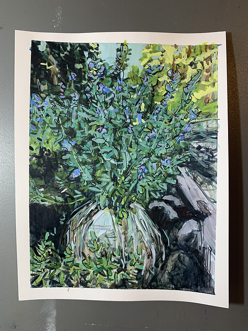 Bluebells, Mead Lake, The Bighorns