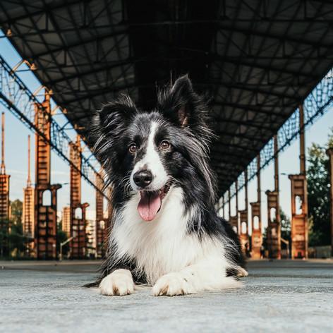 Urban City Dogs Turin #2