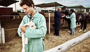 veterinari-2016_03_11_165105.jpg