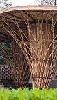 bambu4.JPG