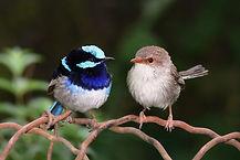 pássaros.jpg