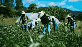 Os riscos do abandono da agricultura familiar