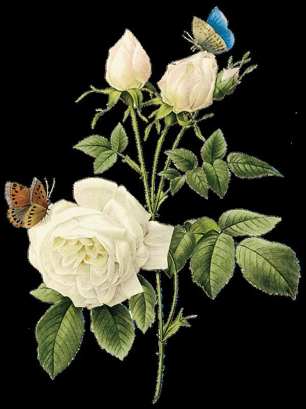 FAVPNG_rose-clip-art_14uSd4Uf.png