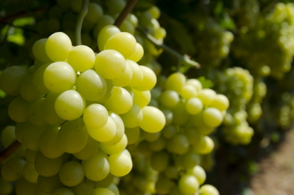 wine_566481
