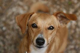 Empire Pet Care Dog looking up at human