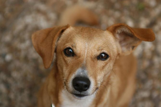 犬のしつけ教室と飼い主と訓練と