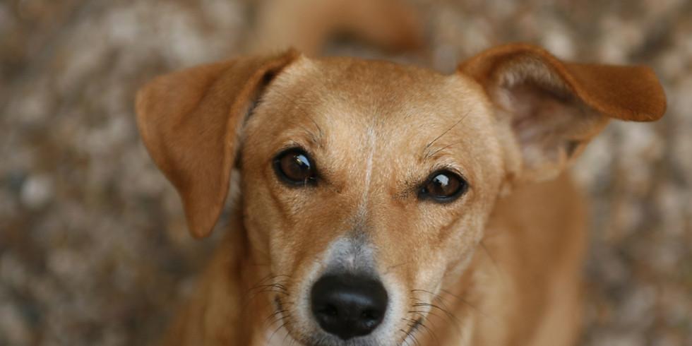 Akutsjukvård för hund