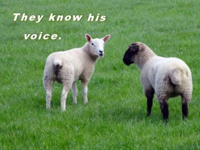God Is Not Silent – He Is Not Distant