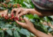 respect de l'environnement et développement durable rainforest alliance