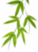 Bamboo-leaves trimmed.jpg