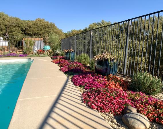 Backyard / Drip system