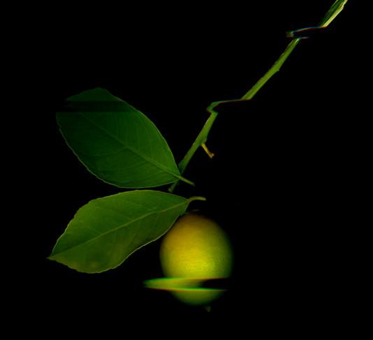 Glitch Lemon