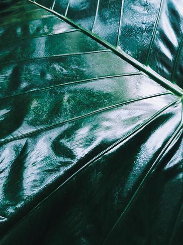 PicsArt_04-09-02.53.23.jpg