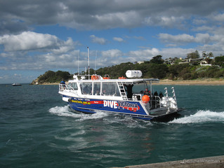 Dive Victoria ceases trading