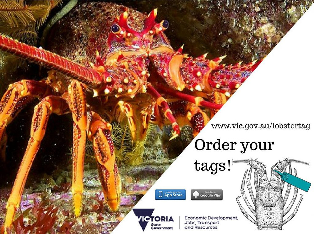 Southern Rock Lobster (Cray) Tagging program
