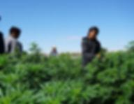 Navajo_workin in field.jpg