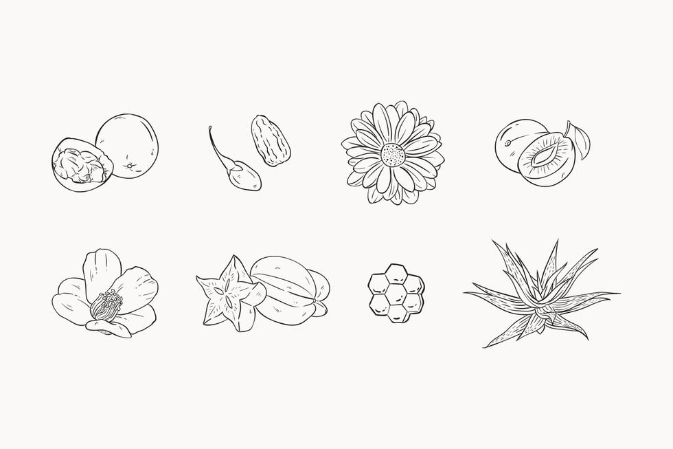 Herbal Tea Bottles Illustrations