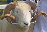Ram testing