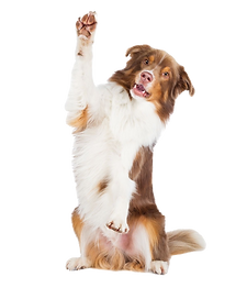 Clyde pet health club