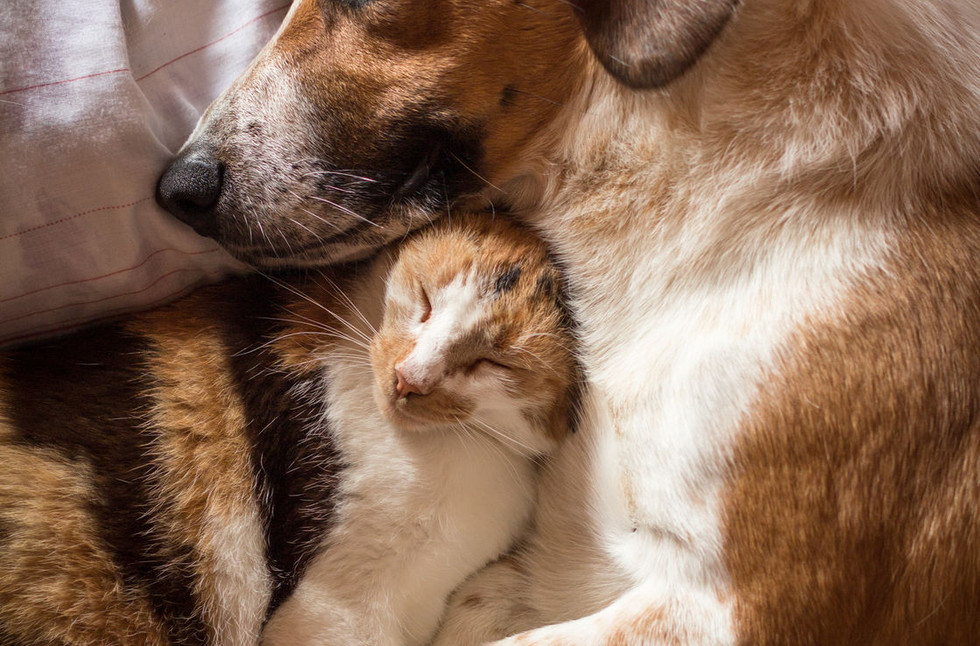 dog-and-catjpg