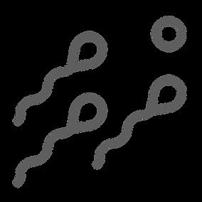 Bull Fertility Examinations