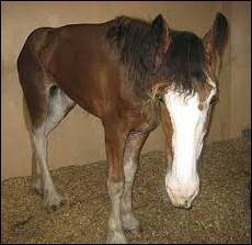 Equine Grass Sickness
