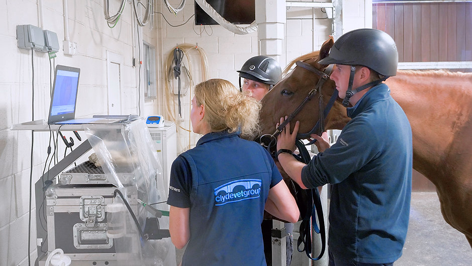 Equine vets in Clyde