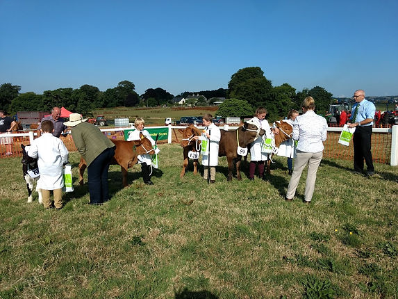 Liskeard Show - young handlers beef.jpg