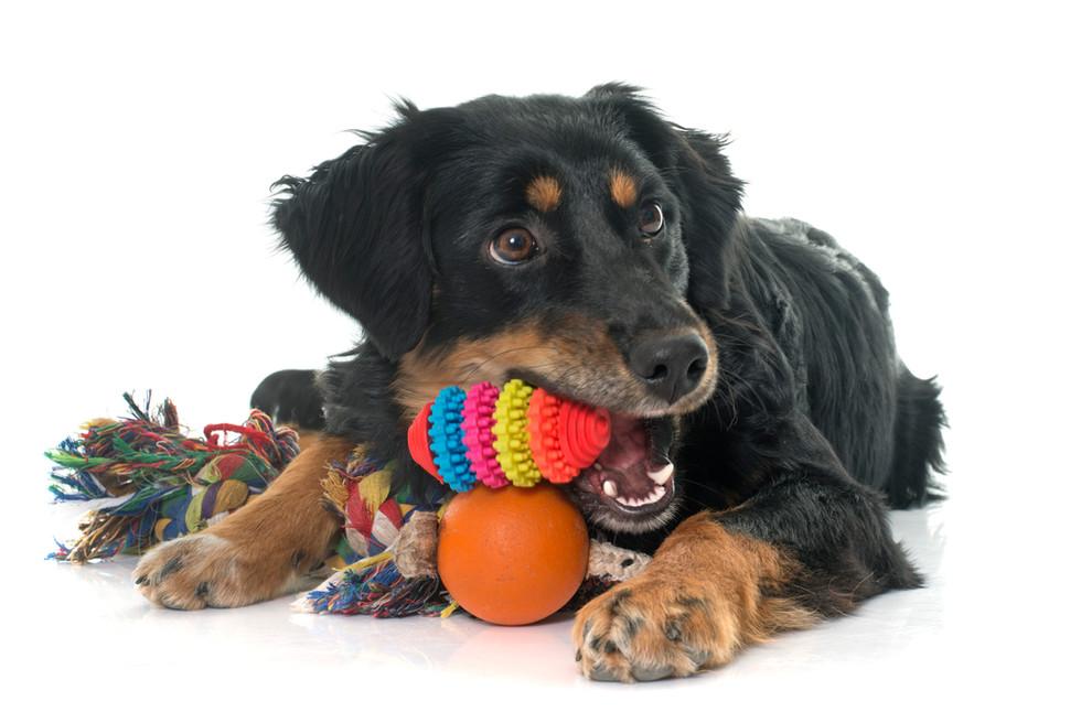 dog-and-toysjpg