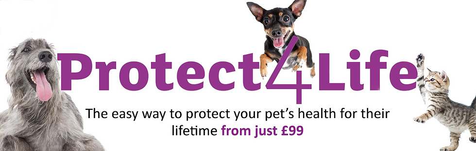 Protect4Life