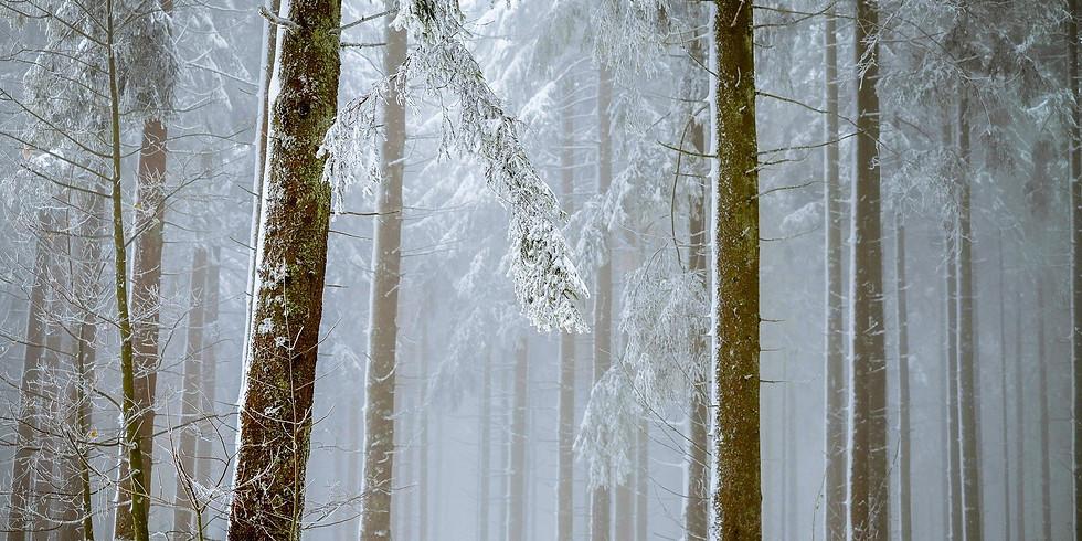 Monthly Meditative Walk - January 2021