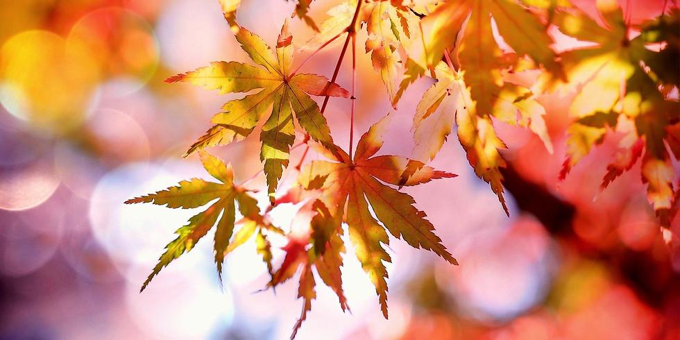 Monthly Meditative Walk-October 2021