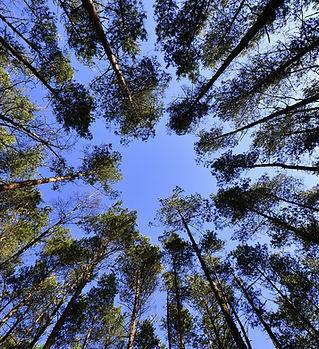 forest-231066_1920.jpg