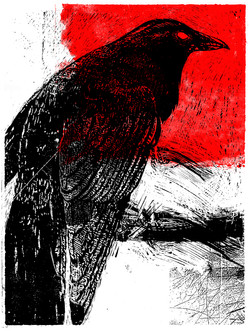 Crow red variant