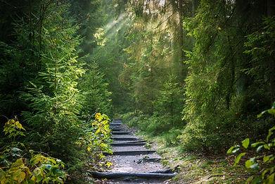 chemin_dans_la_forêt-2942477_1920.jpg