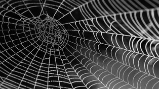 Wie und warum baut die Spinne ihr Netz?