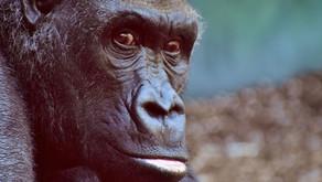 Tierstimmen - Wie klingen sie?