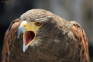 bird-of-prey-188813_1920.jpg