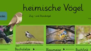 Mach mit: heimische Vögel