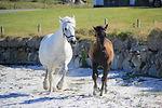 pony-3605549_1920.jpg
