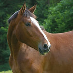 horse-66338_1920.jpg