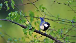 Vogelstimmen mit ganz einfachen Tricks erkennen