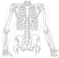 skeleton-41569_1280.png