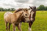 foals-2974948_1920.jpg