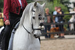 andalusians-3123720_1920.jpg